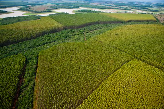 Forêt Vallourec