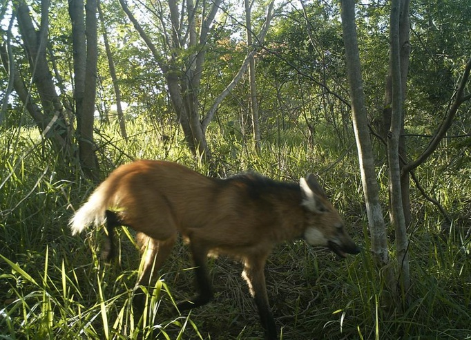 Brazil: fauna found in monitored areas